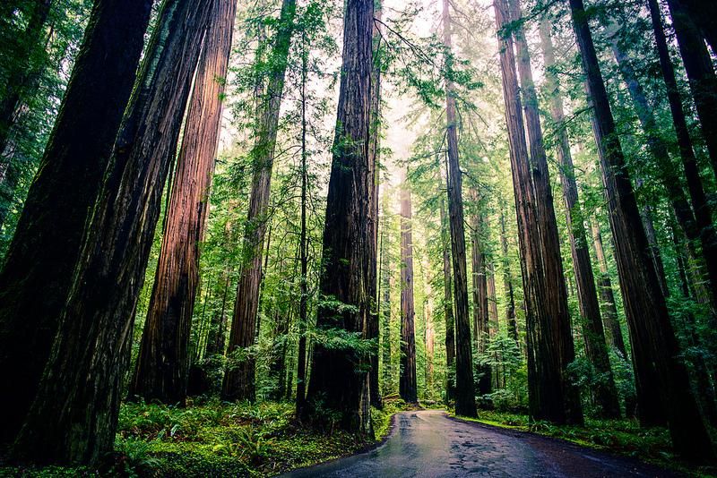 04_23_2013_redwoods